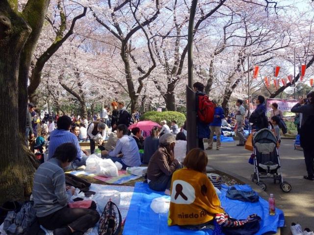 Ludzie świętujący Sakura- święto kwitnienia wiśni
