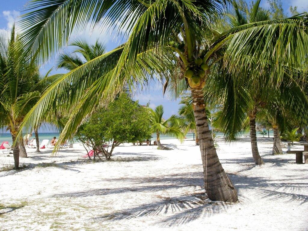 plaża z palmą