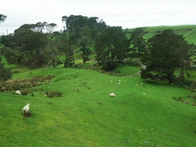 Zielone wzgórza i pasące się owce