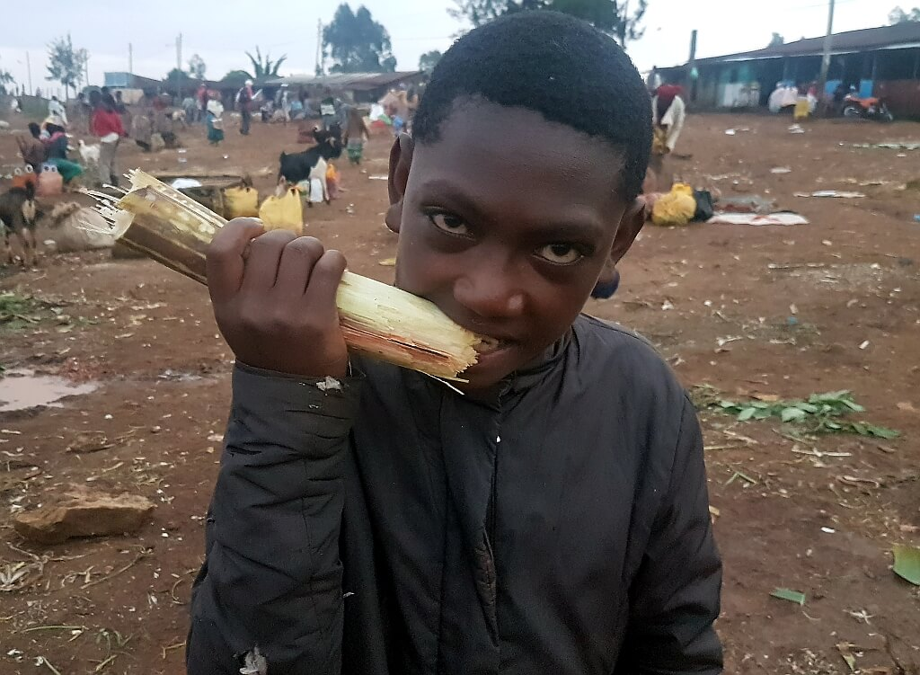 Chłopiec wyciskający słodki sok z trzciny cukrowej