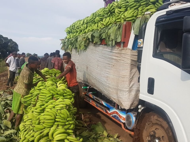 Banany sprzedawane bezpośrednio z samochodu