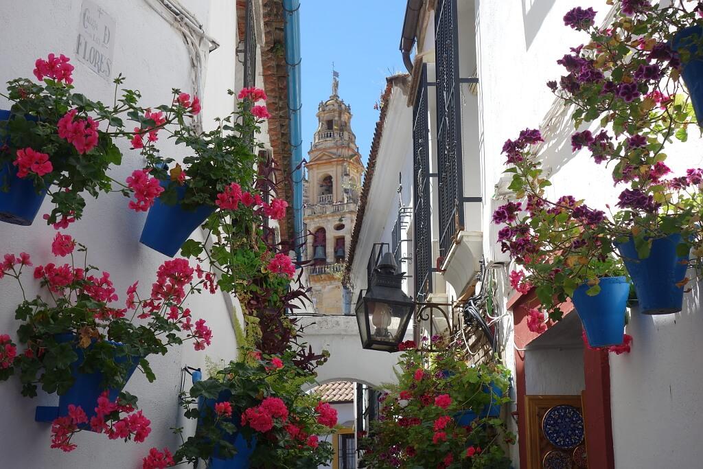 Pelargonie w niebieskich doniczkach zdobią hiszpańskie miasta. Tu w tle słynna la Giralda