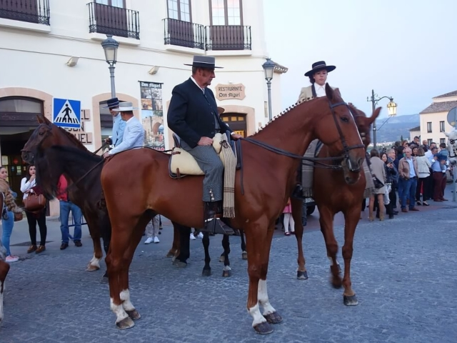 Elegancje konie przygotowane do parady