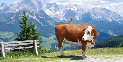 Austria – rodzinne Alpy latem