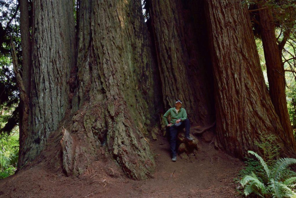 Kępa olbrzymich drzew