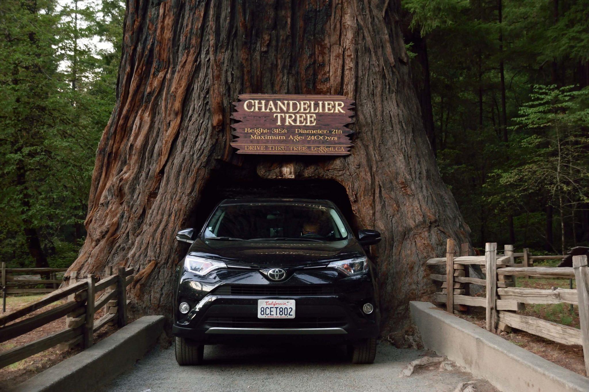 drzewo, przez które przejeżdża samochód